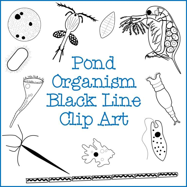 Pond Water Organism Clipart Set: Amoeba, Paramecium, and More ...