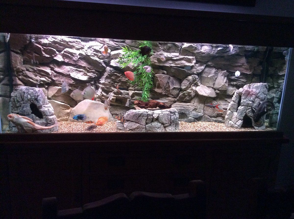 3d Rock Background With Our Empty Inside Rocks Your Fish Can Swim