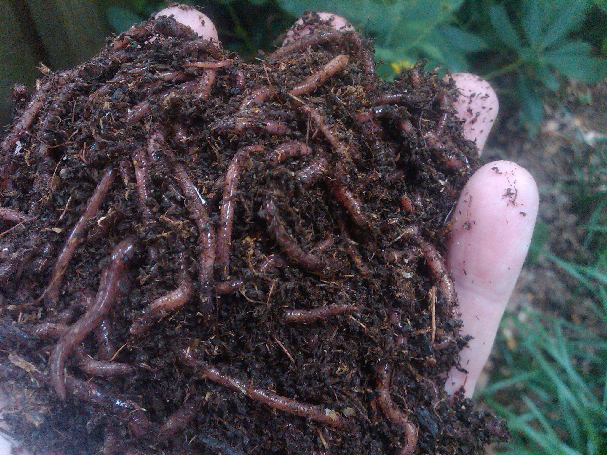 Картинки по запросу soil