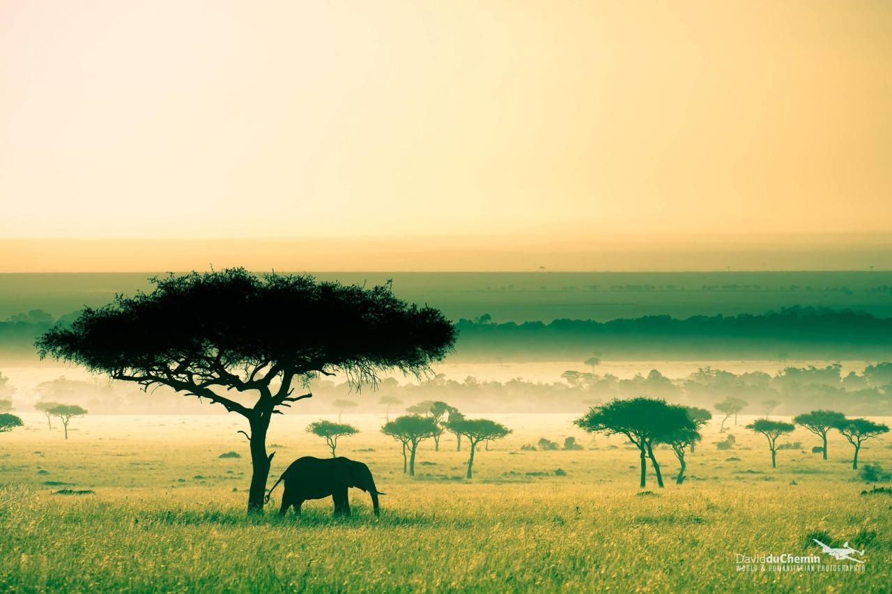 Masai Mara Game Reserve, Kenya, David du Chemin