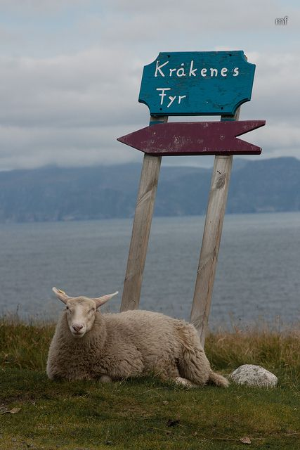 Direction Sheep - Norway