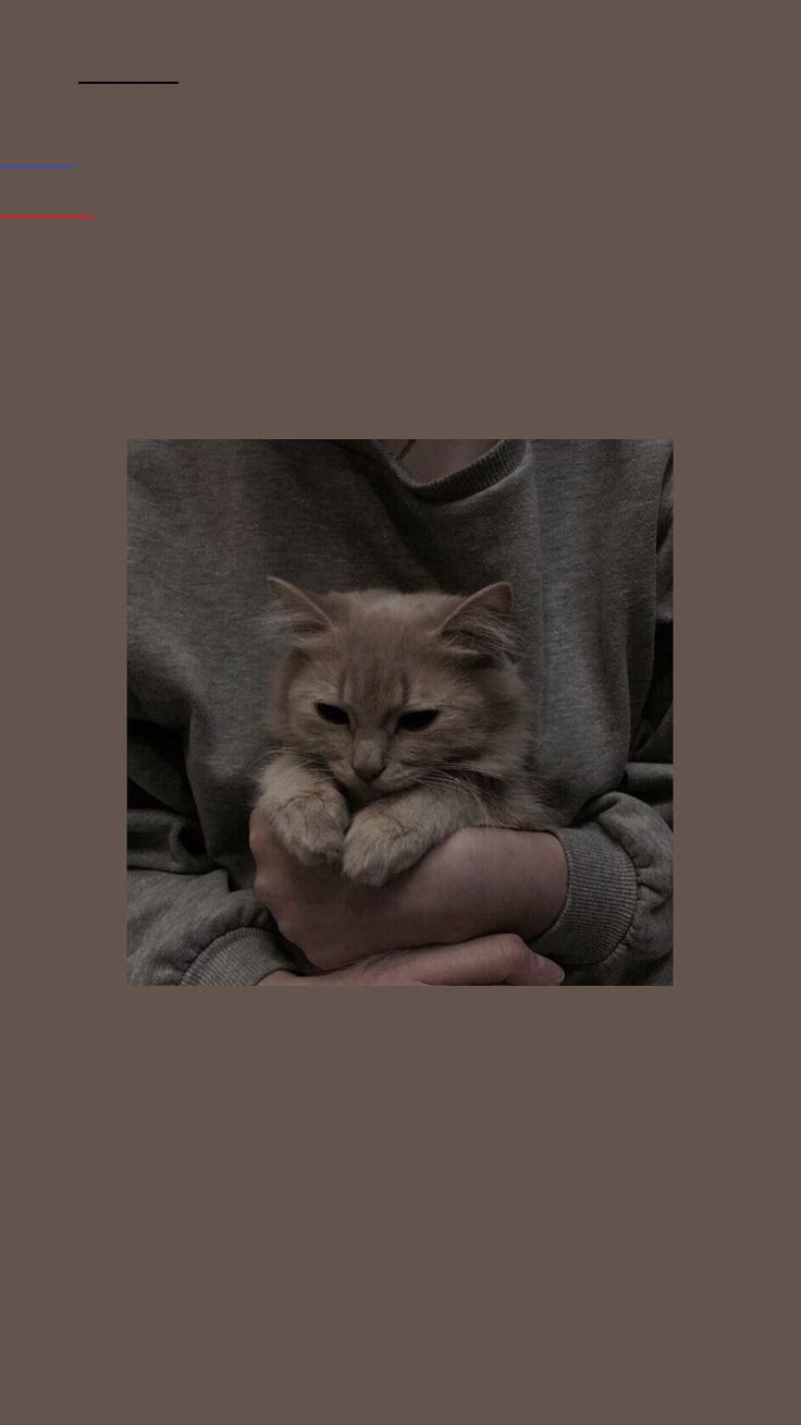Photo of – allWandpaper – #notitle #wallpaper – Cats Wallpaper – #Cats #notitle #Wallpa …