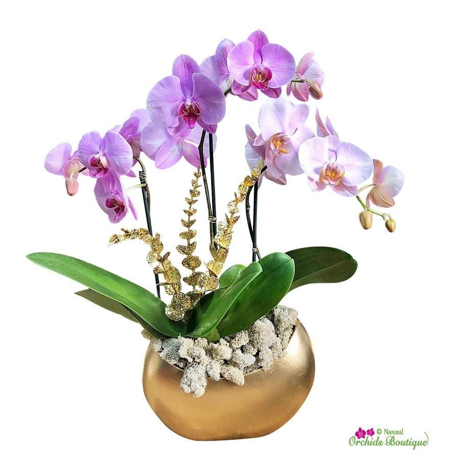 Orchid Gift Ideas Flower Arrangement With Phalaenopsis Orchids Orchid Arrangements Flower Arrangements Orchids