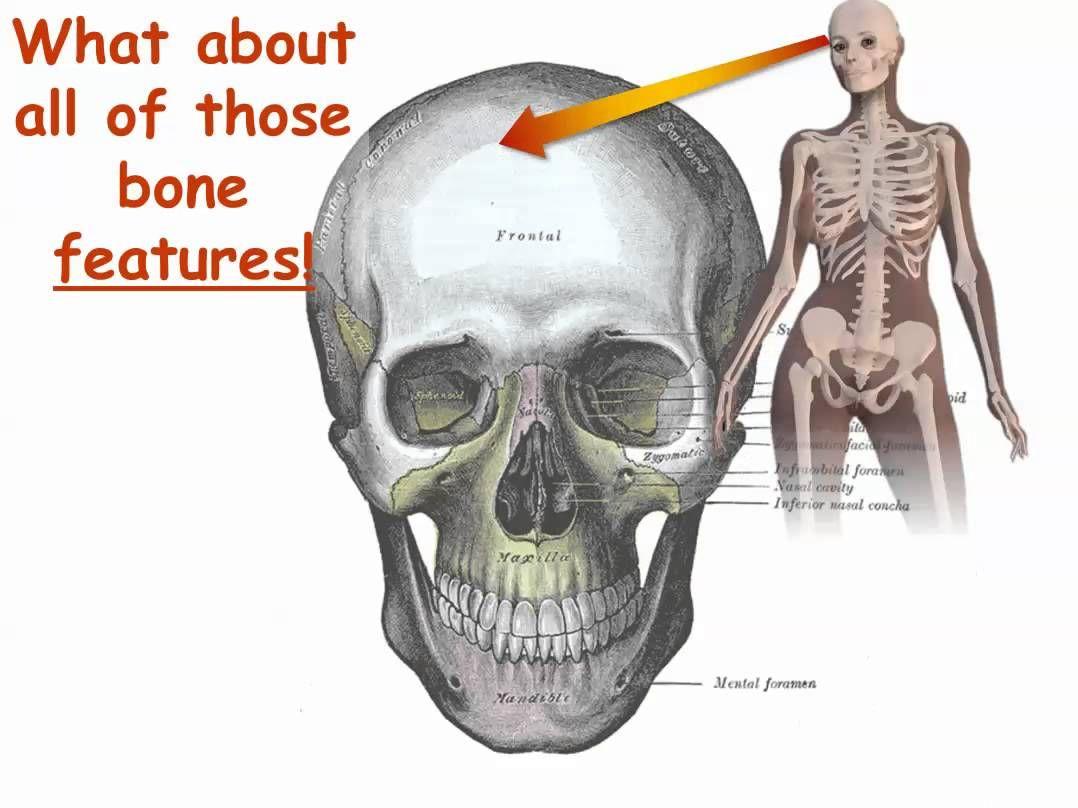 Bone Names Have Meaning Part 1 Get Started Nursing Stuff