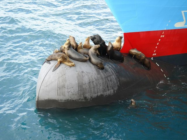 Sea lions relaxing on the bulb | Sea lion, Image, Logistics