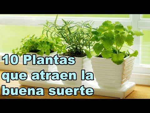 Las plantas que dan buena suerte son buena suerte - Dan mala suerte las hortensias ...