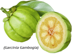 Pure garcinia cambogia nz side effects