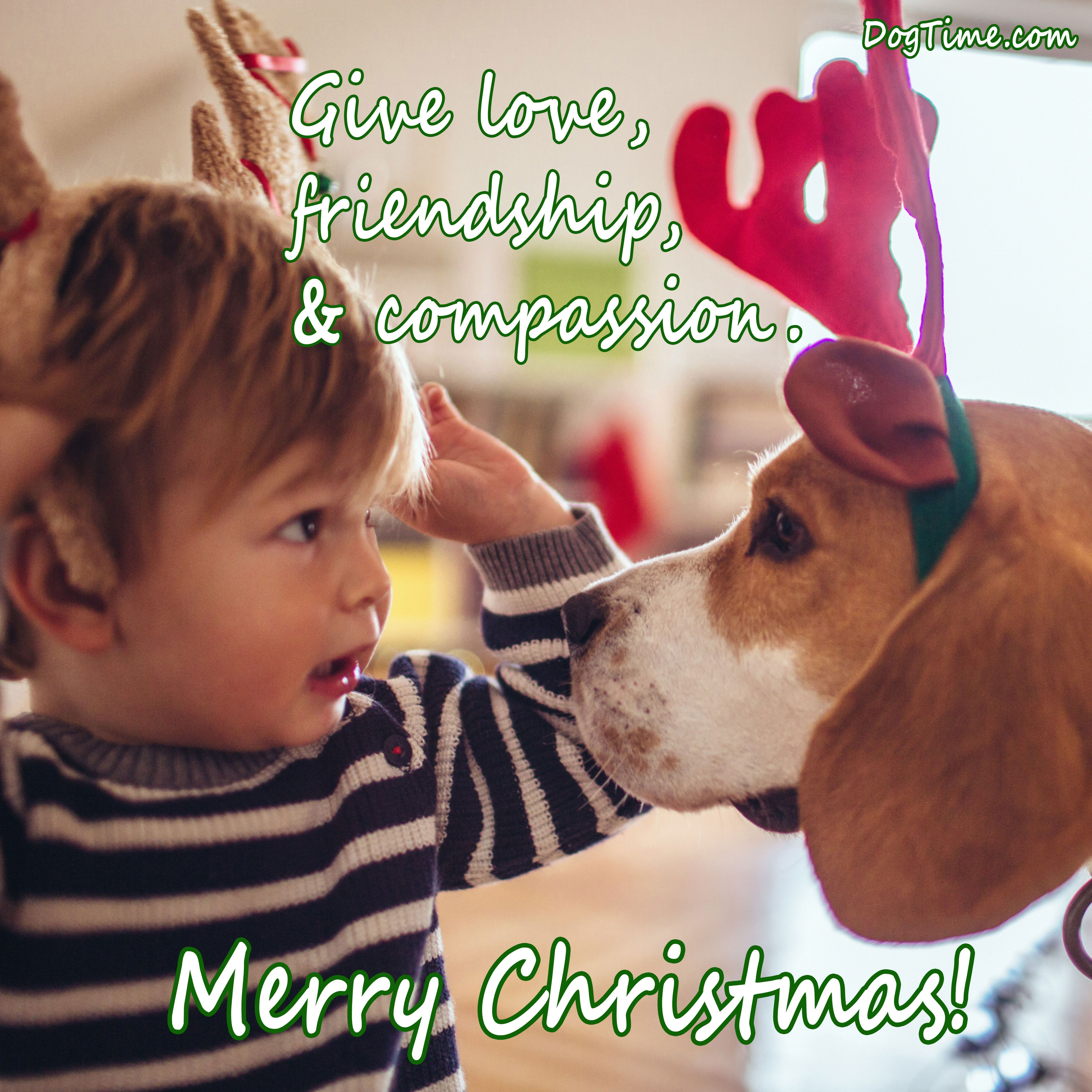 30 Dog Christmas Cards To Share With Your Friends And ...