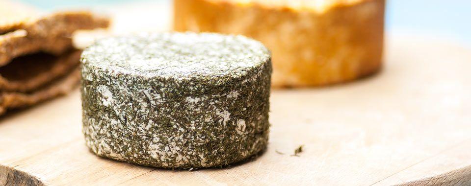 Raw cheese recipe: Almond Ricotta Cheese with Dill - organictalks.com