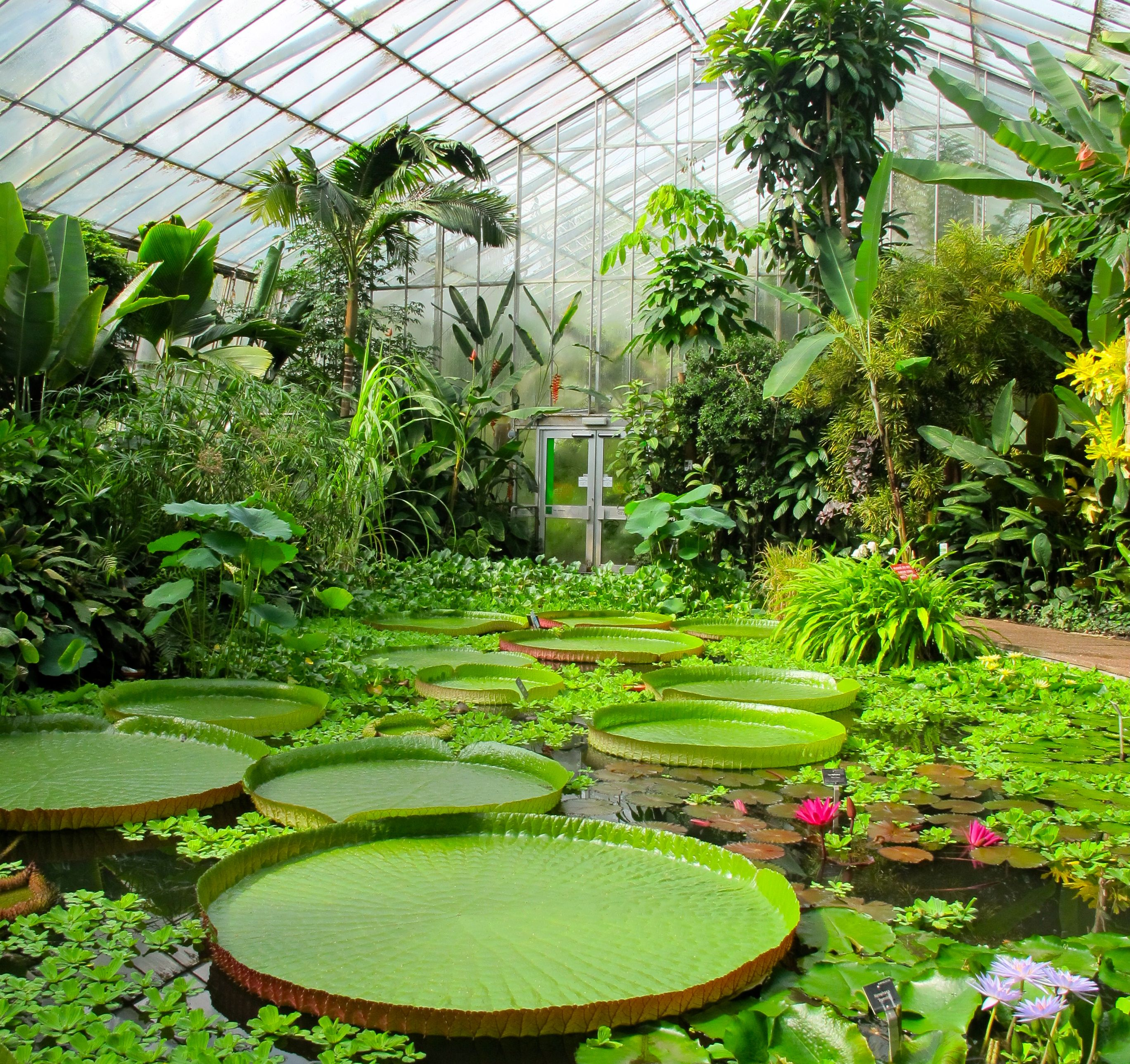 4a853d45b56ca690ee9a2c689919dd2b - Can You Drink Alcohol In The Royal Botanical Gardens