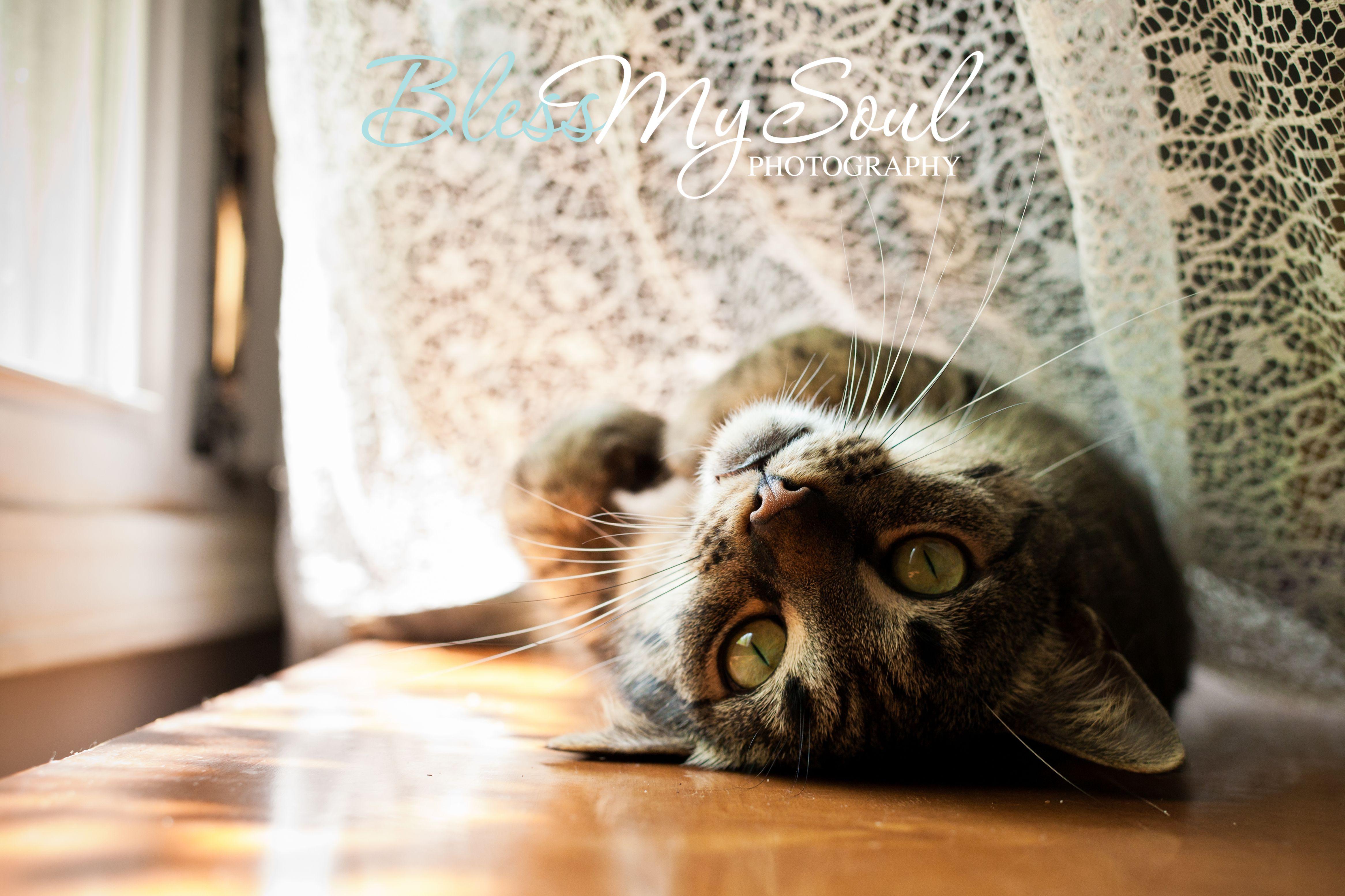 cute cat, cat model