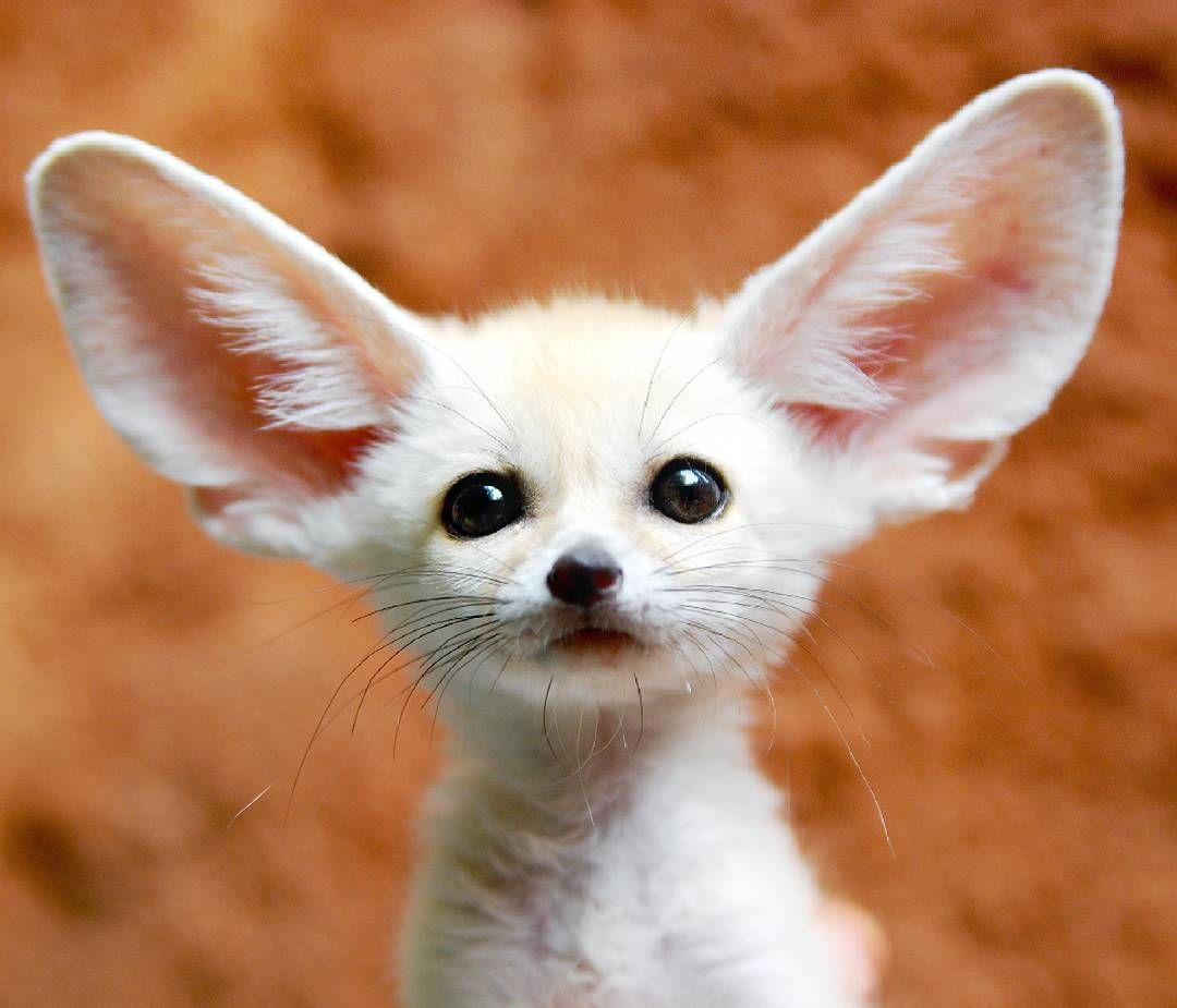 """Sweety Tag @animalglobe for cute animals photos!"""