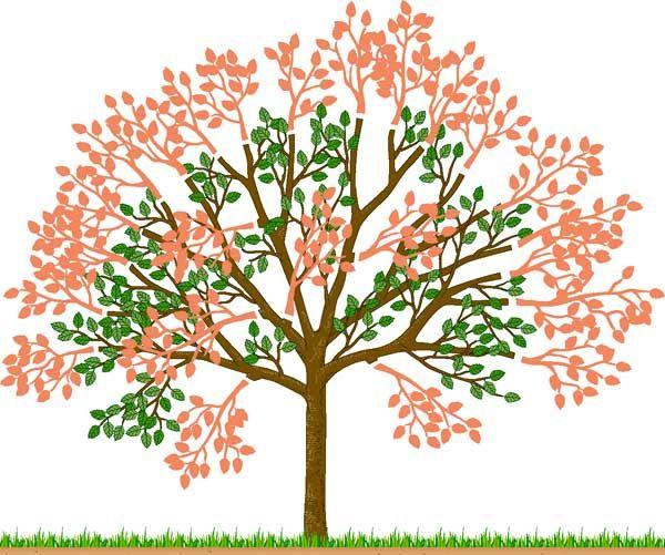 kirschb ume im sommer schneiden garten kirschbaum garten und kirschbaum schneiden. Black Bedroom Furniture Sets. Home Design Ideas