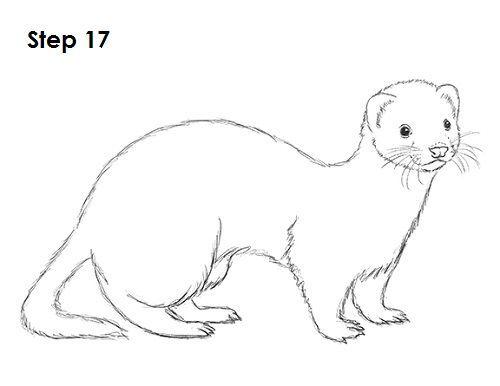 Ferret Drawing 17 Animal Drawings Ferret Tattoo Cute Ferrets