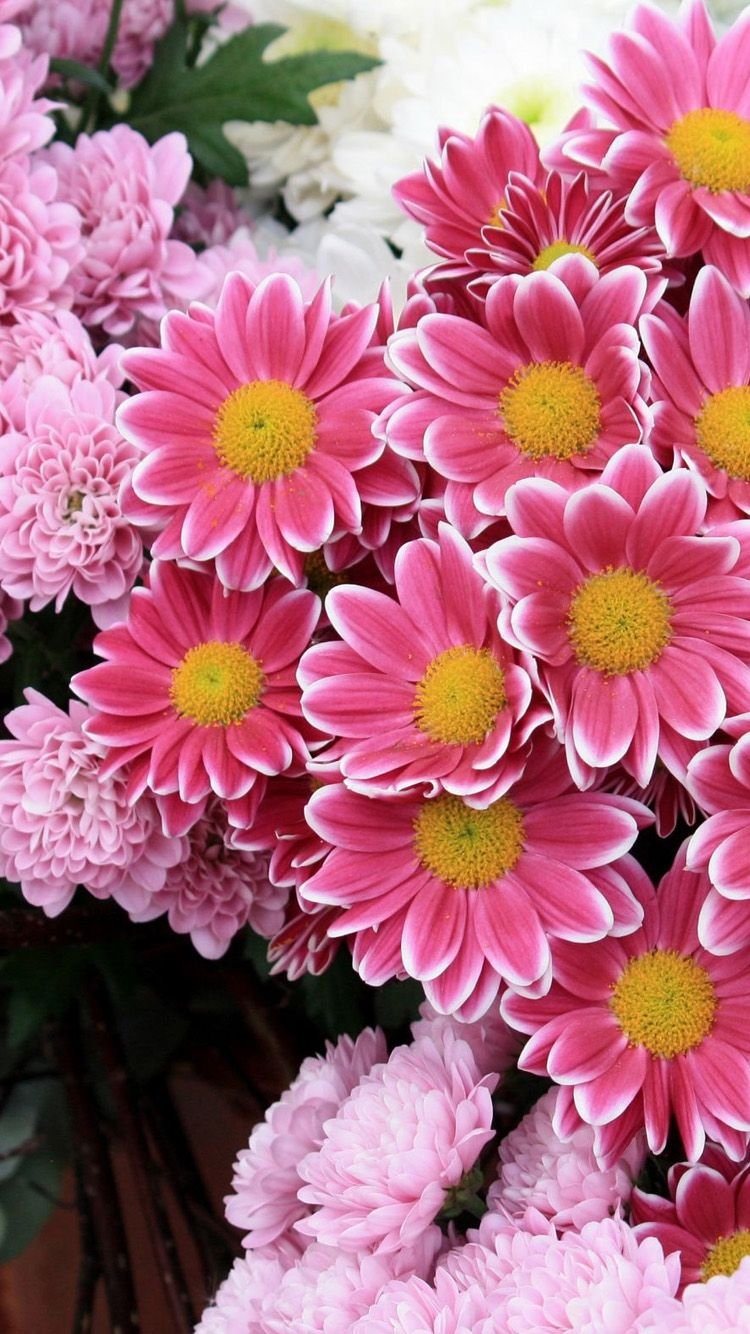 Fresh pink flowers iPhone 6 Wallpaper Flower iphone