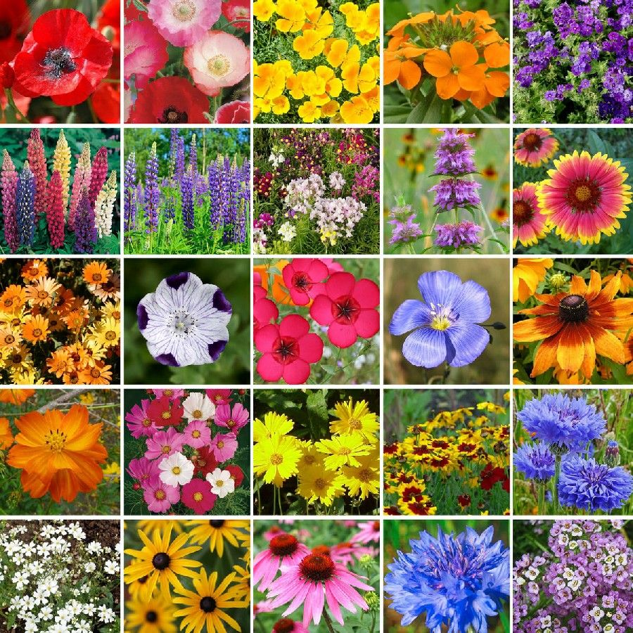 Our southeast wildflower mix contains a rich blend of 25 annual and our southeast wildflower mix contains a rich blend of 25 annual and perennial favorites ideally suited izmirmasajfo Gallery