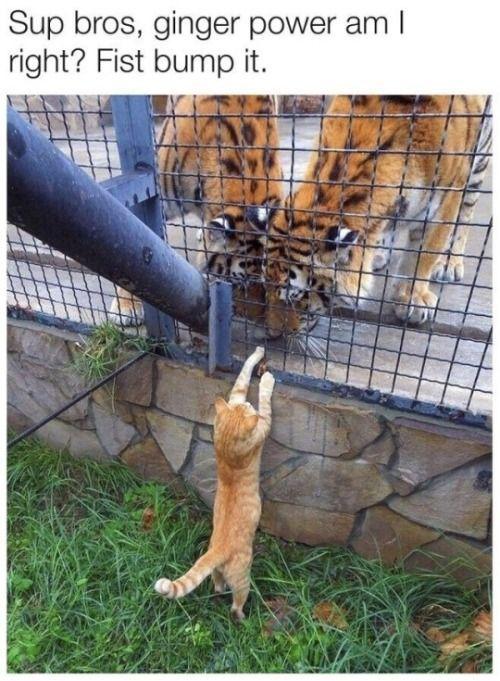 28 der frischesten Bilder und Memes von heute - #animals #Bilder #der #frischesten #heute #Memes #und #von #hilariousanimals
