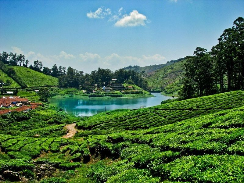Meghamalai Tourism (2020) | Tourist Places to Visit & Tour Packages in 2020  | Travel destinations in india, Places to visit, Scenery