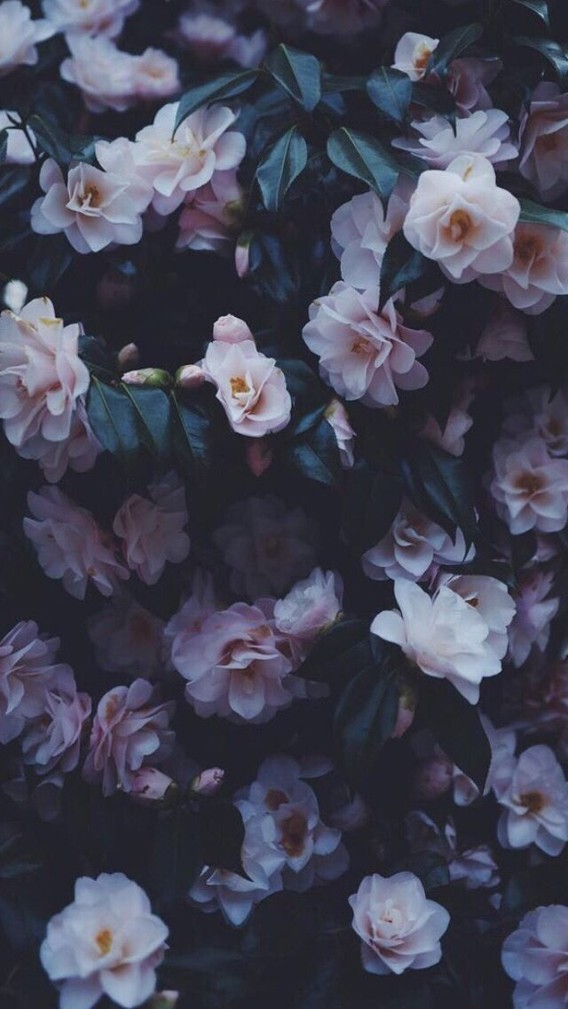 Wallpaper iphone tumblr bunga