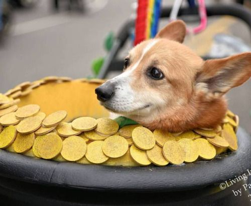 Pin By Jill Snowdon On Corgis Corgi Pets Dogs