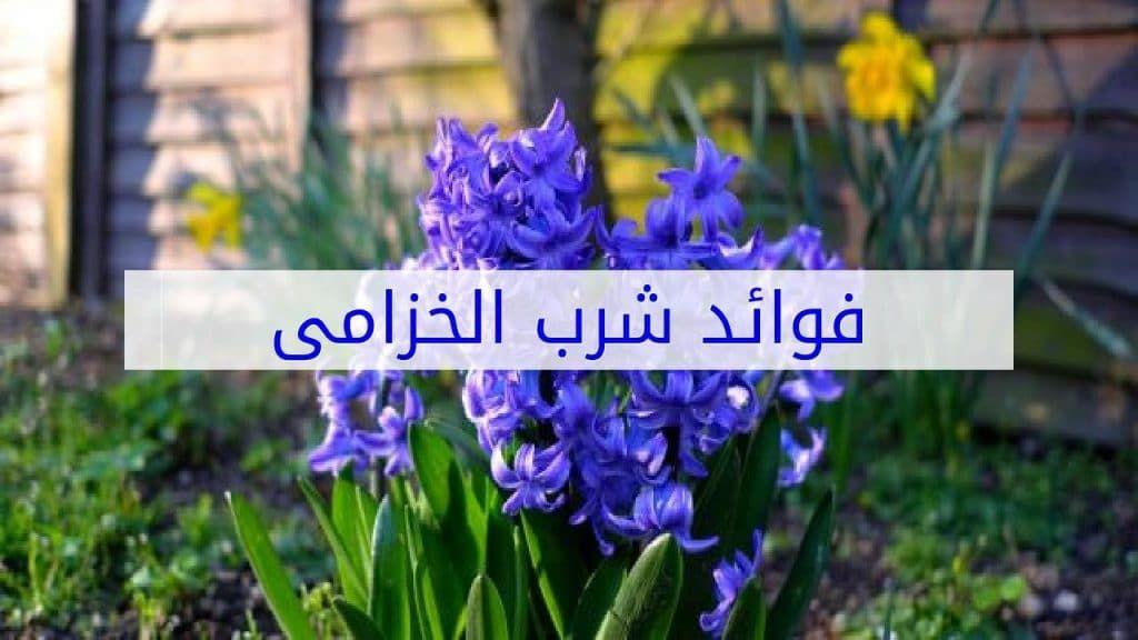 فوائد شرب الخزامى للرحم الفوائد العامة للخزامى Plants Lavender