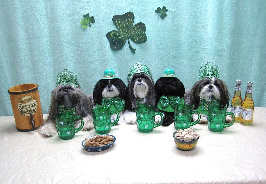 Turning Green On St Patrick S Day Rivers Fountains Beer Shih