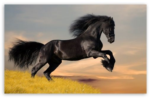 Download Black Horse Hd Wallpaper Photoshopped Animals Horses Most Beautiful Horses