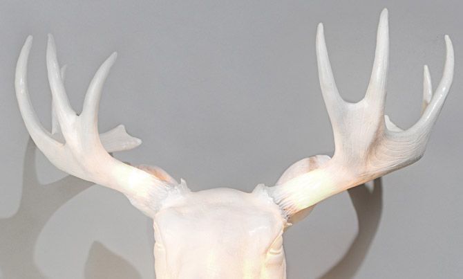 The Moo lamp (moose head lamp) from Northern Lighting Find out - küchenmöbel gebraucht kaufen