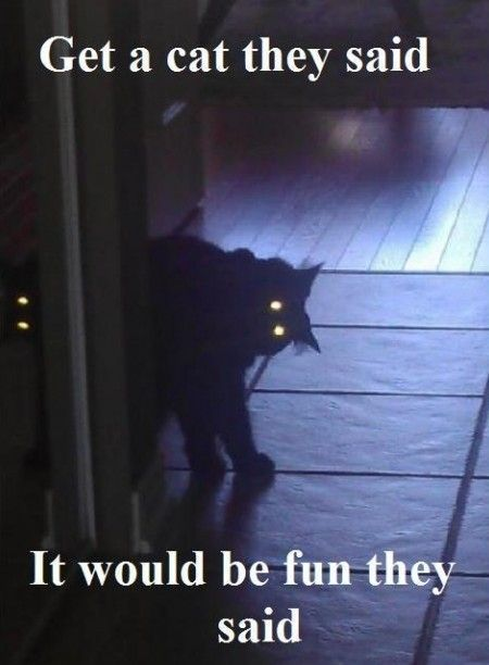 Scary Cat Quotes. QuotesGram | Scary cat, Funny pictures ...