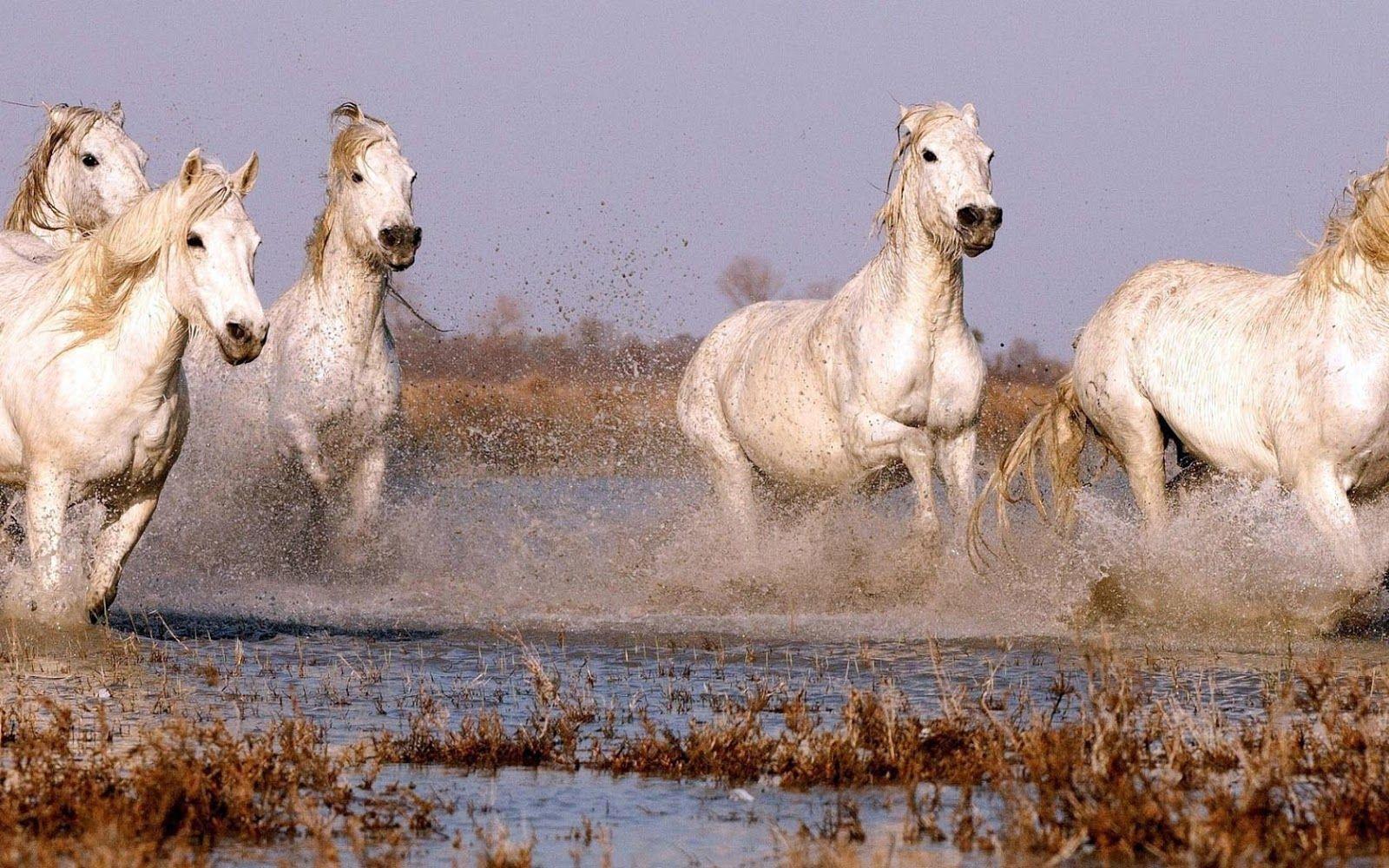 Horse Wallpaper For My Desktop Pc Laptop 38 Horse Wallpapers In Horses