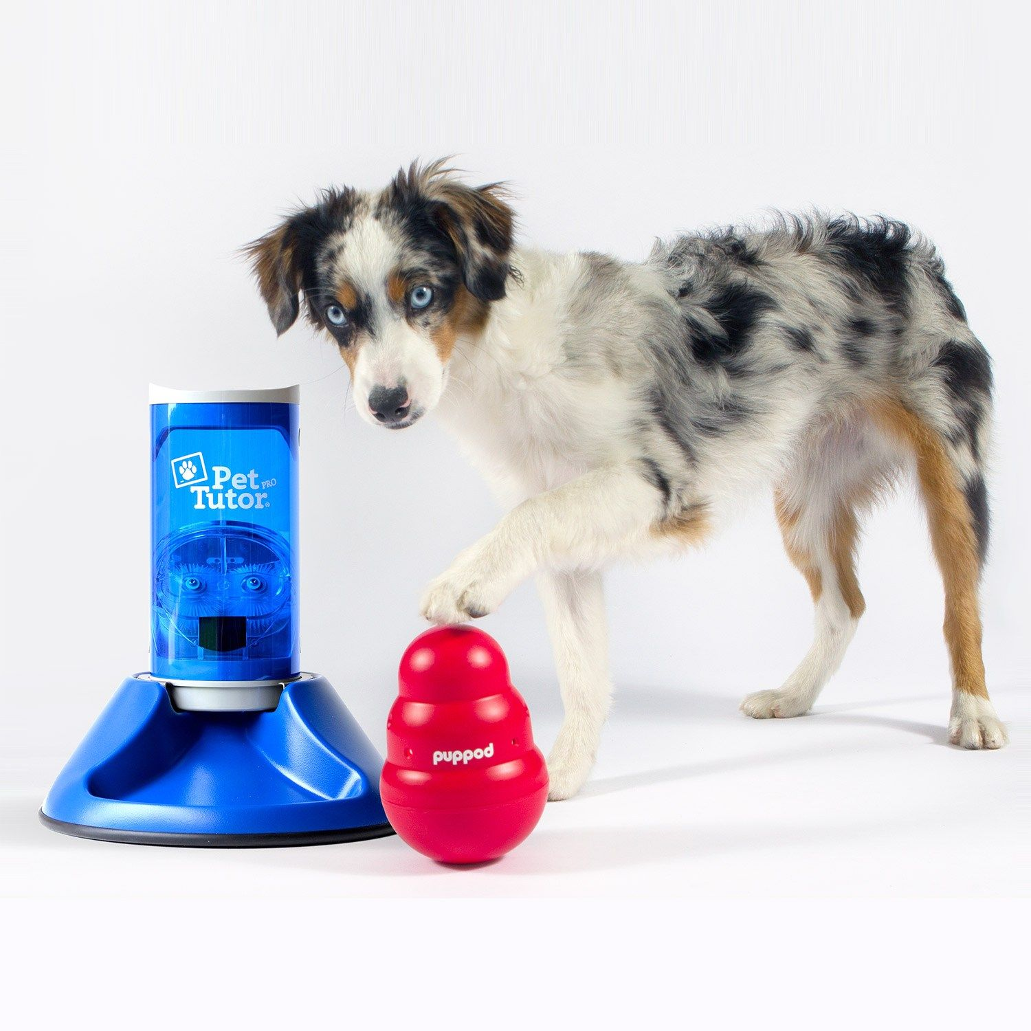 Puppid A Gaming Learning And Social Platform For Dogs And Pet