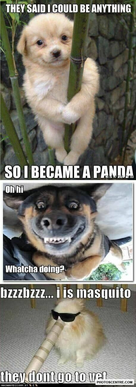 Best Funny Dogs Funny Baby Animals—15 Soothing Pictures You Won't Resist! Funny dog pictures – 9 PHOTO! On #funnydogs #topdogs #dogmemes #cutedog #cutepuppys #cutedogs 8