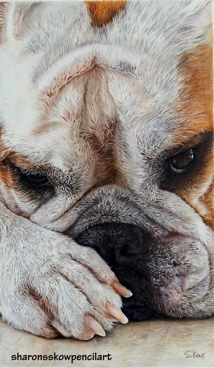 """""""Contemplation"""" by Sharonsskow Pencil Art on a 22"""" x 15"""", 300gm hot pressed watercolour paper (Lanaquarelle) using Faber Castell Polychromos colour pencils."""
