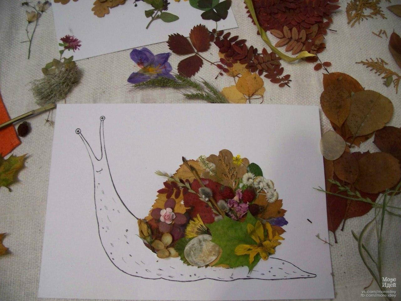 творческий проект Картина из засушенных цветов по ...