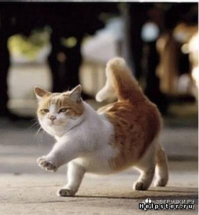 """Watch me WHIP-WHIP...watch me NAE NAE!"""