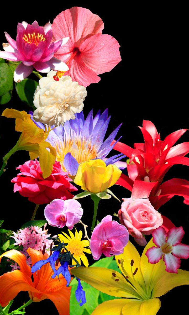 Floral bouquets with black background google search fr booard
