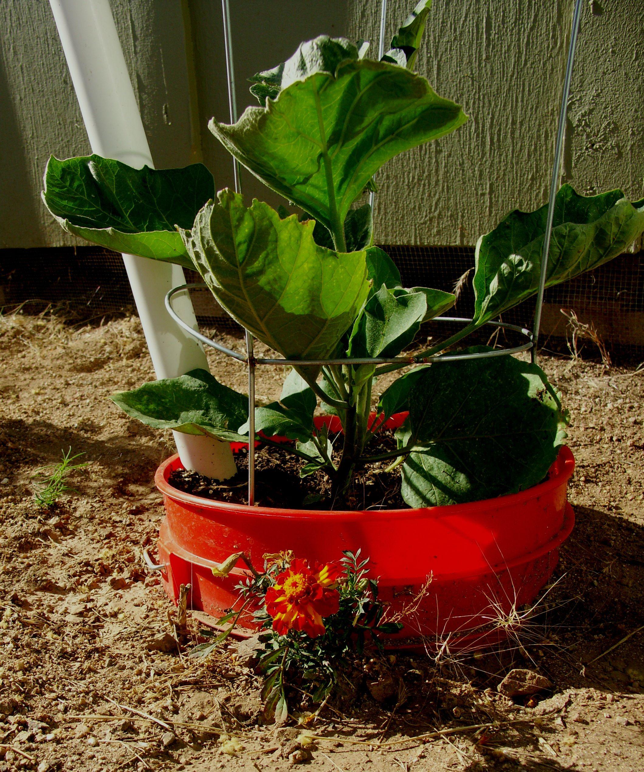 Bucket gardens start with Home Depot buckets