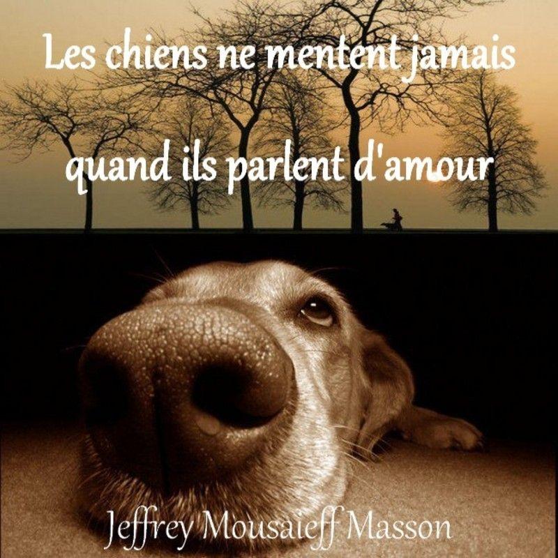 Fabuleux citation chien - Recherche Google | Citations et Inspirations  KS83