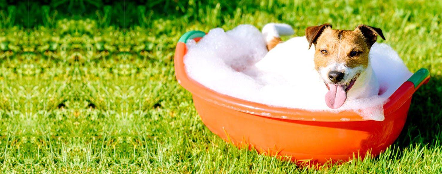 How To Give A Dog An Epsom Salt Bath Epsom Salt Bath Epsom Salt