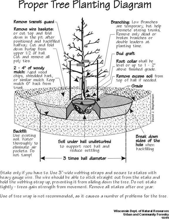 tree planting diagram so many people even those who should knowtree planting diagram so many people even those who should know better plant
