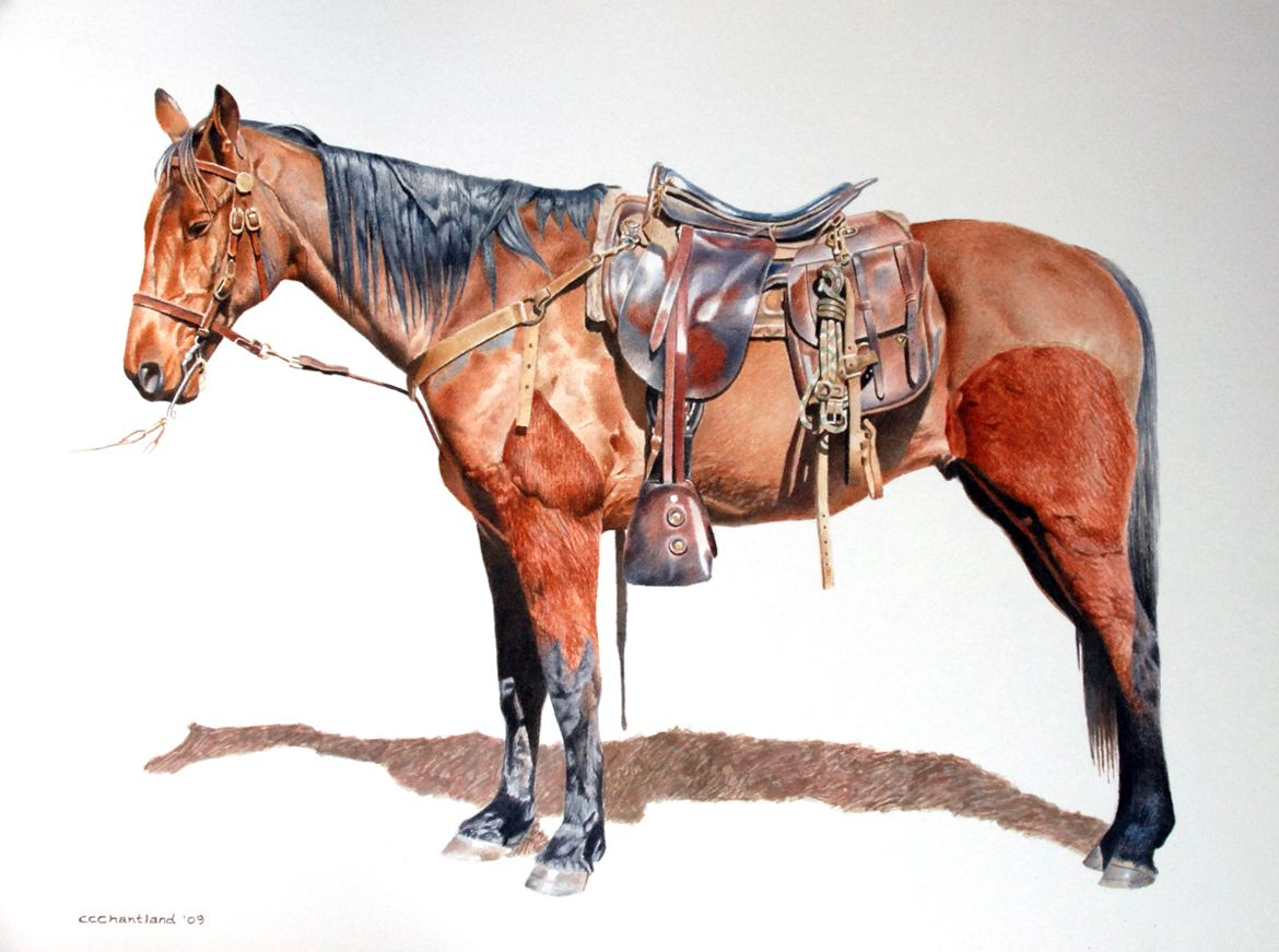 """""""Plantation Cut."""" A watercolor of a horse from a"""