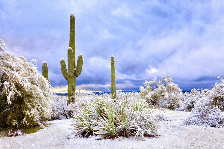 Photo of Rare Snowfall in Arizona Transforms Rocky Desert into Surreal Winter Wonderland