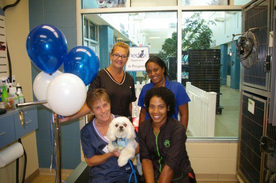 Get Your Pet Groomed At Grooming By Kennelwood Inside Of The Humane Society Of Missouri A Portion Of Proceeds Benefit Our Shelter Humane Society Your Pet Pets
