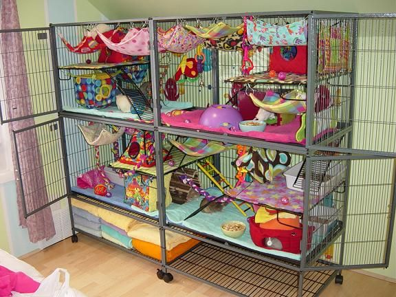 I want a similar setup for rats i think this would for Simple guinea pig cage