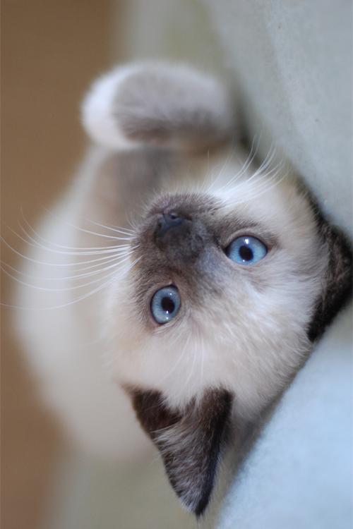 Adventure Awaits Cute Cats Beautiful Cats Calming Cat