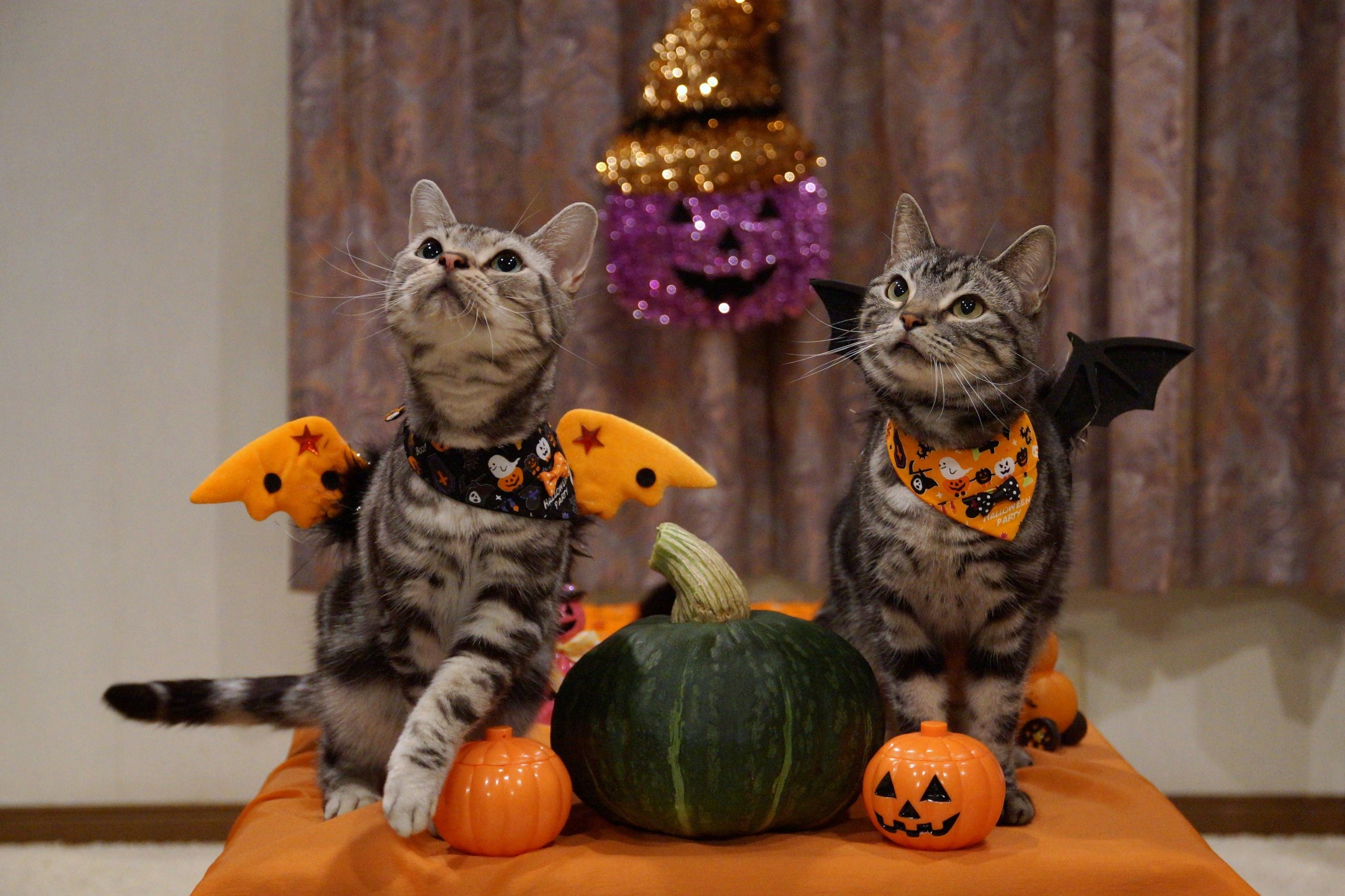 Pin By Isabelle Conley On Halloween Cat Cute Animal Drawings Halloween Cat Magic Cat