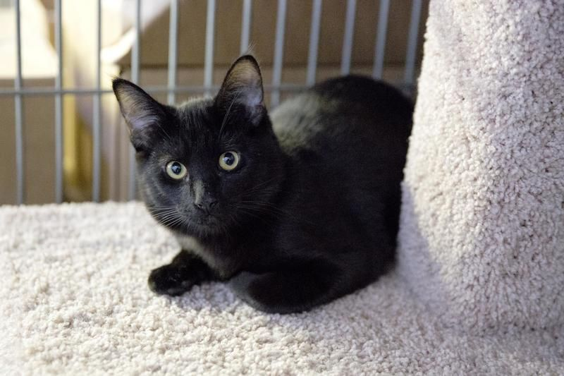 Adopt Ciggy On With Images Cat Adoption Cats Cats And Kittens