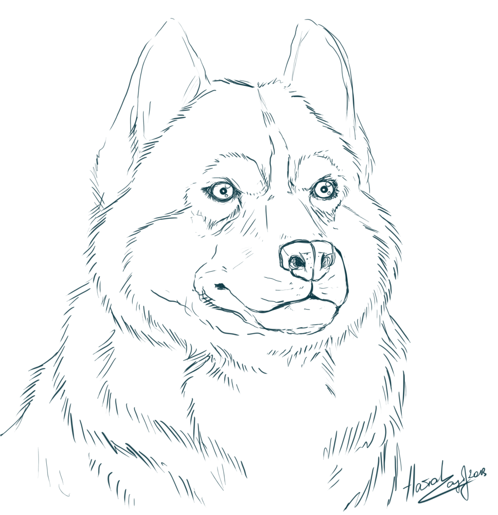 Realistic Line Drawings Google Search Horse Coloring Pages Coloring Pages Alaskan Husky