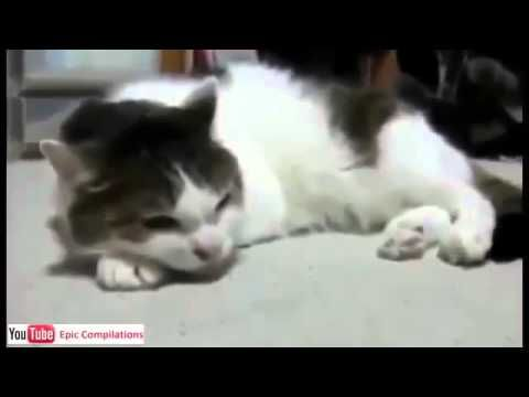 """Fanny cat Videos- Best Funny cats fails Compiation 2016 - http://positivelifemagazine.com/fanny-cat-videos-best-funny-cats-fails-compiation-2016/ http://img.youtube.com/vi/aNuFIlhtig8/0.jpg                                             Funny Cats Compilation Funny Cat Videos Ever Part 1 … It's funny when a cat does something.    source                                   Please follow and like us:  var addthis_config =   url: """""""",  title: """""""""""