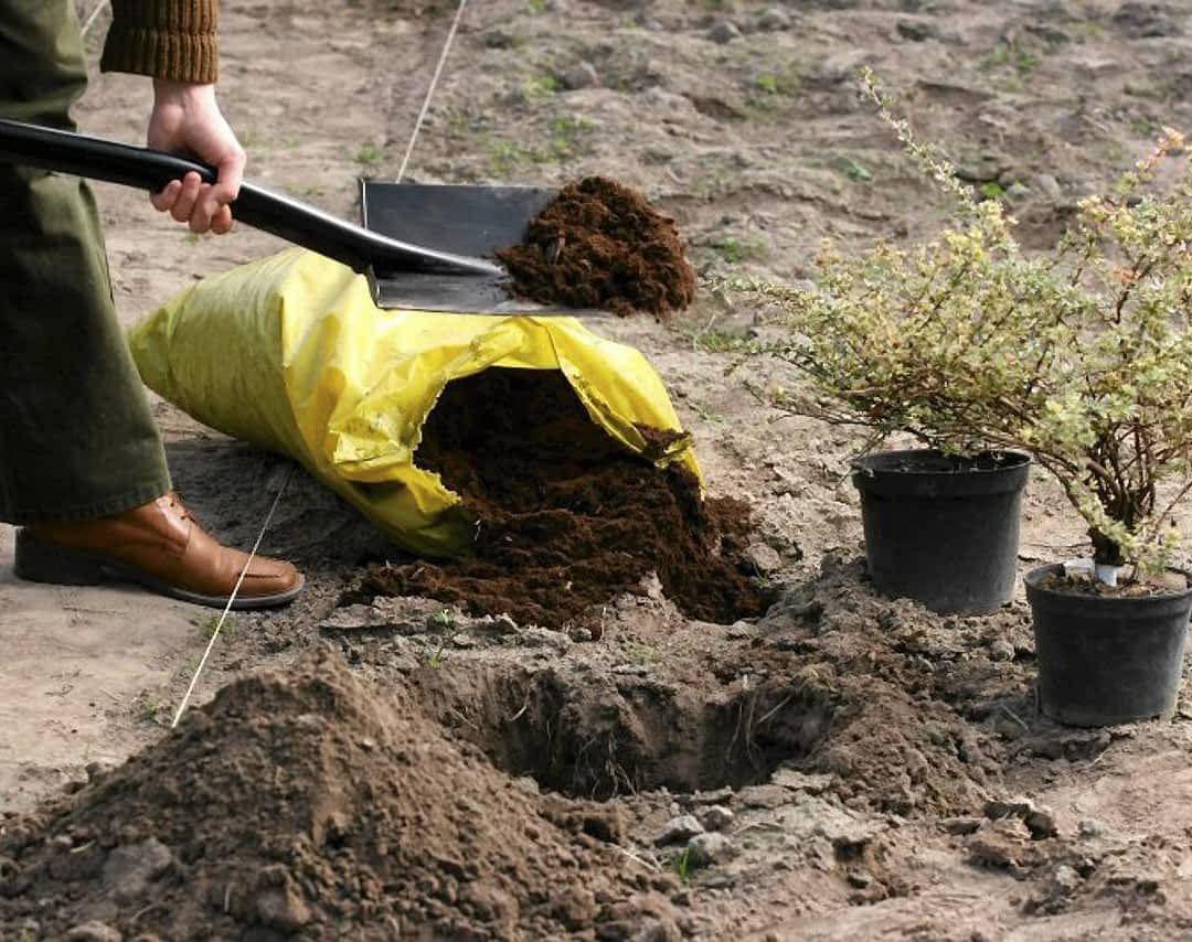 Wrzesien To Doskonala Pora Na Sadzenie Dzielenie I Przesadzanie Wielu Roslin Ogrodowych Dla Niektorych Z Nich To Juz Outdoor Power Equipment Outdoor Leaves
